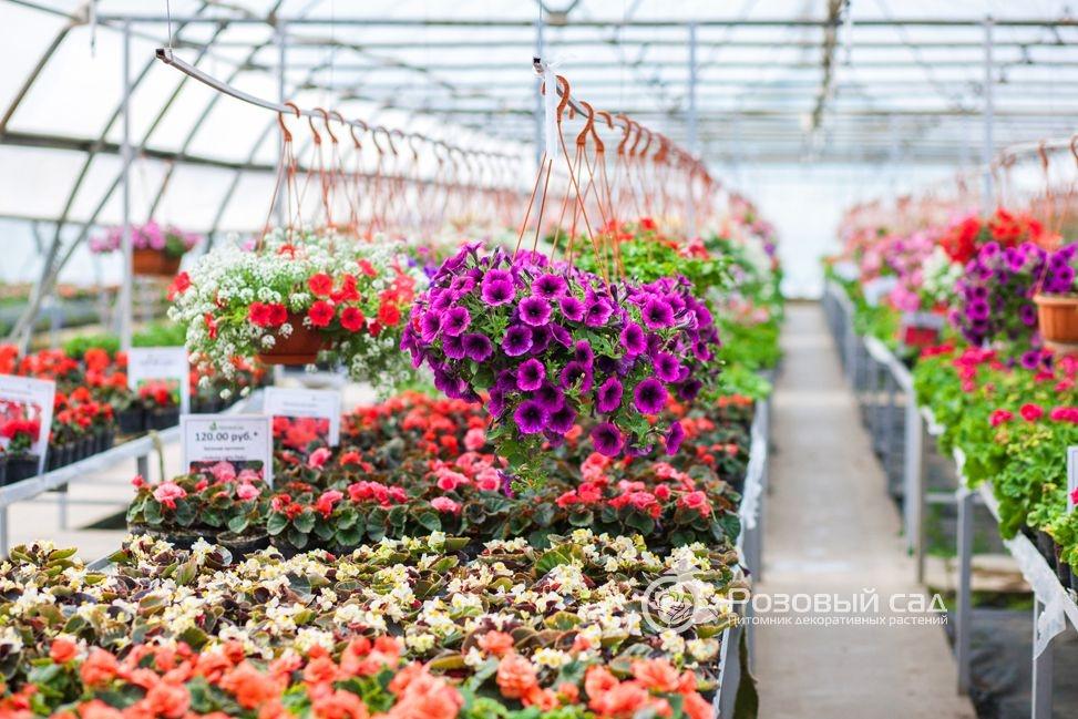 Питомники рассады и растений 549