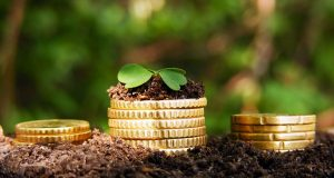 Money growth. Golden coins in soil with young plant.